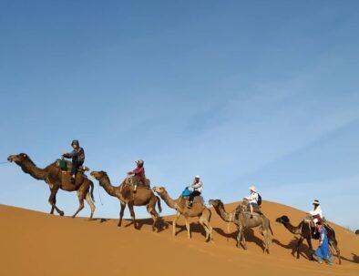 Camel trekking with our 2 days Marrakech desert tour to Zagora