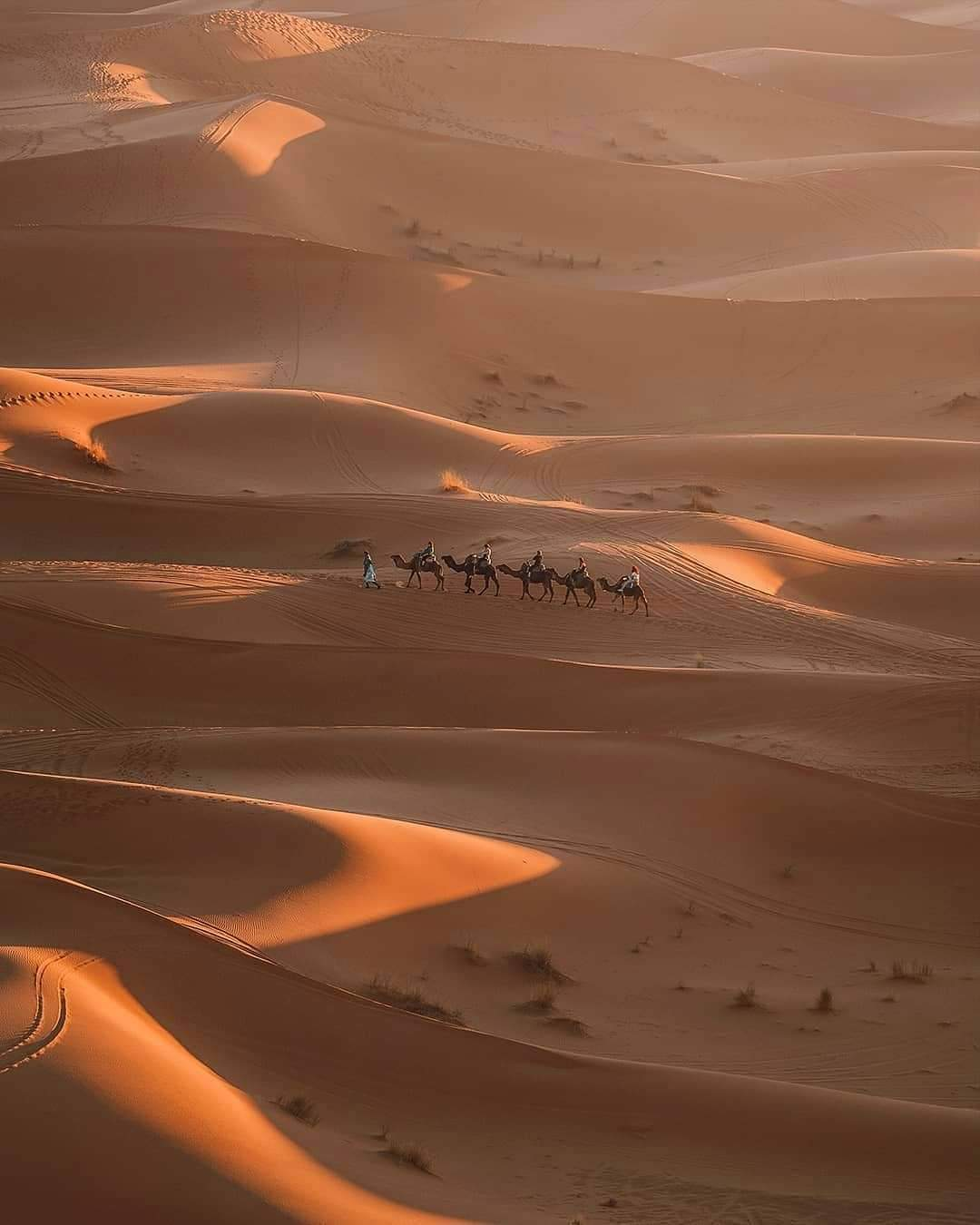 Camel trekking, the best thing you will experience with our 4 days desert tour from Marrakech to Fes